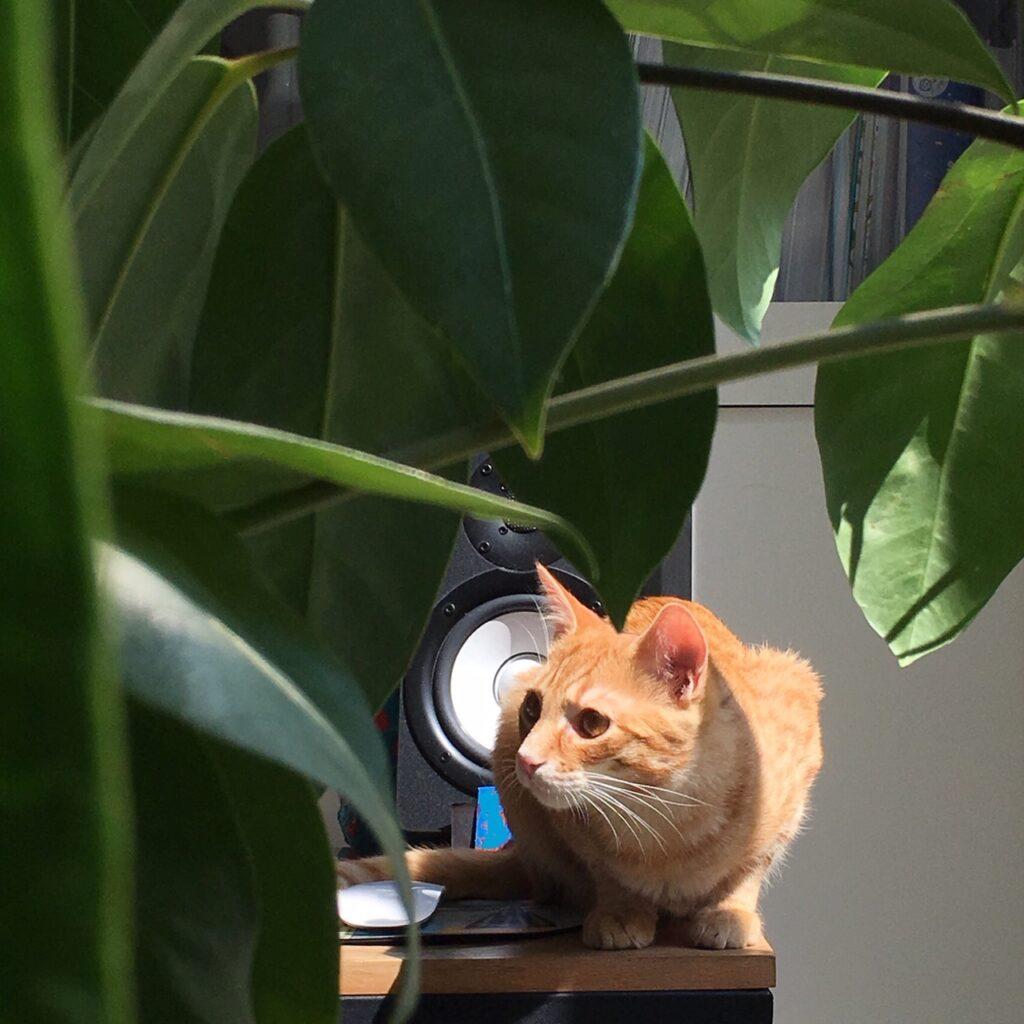 Cat sitting next to a speaker